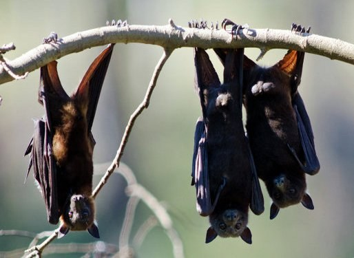 How to bring the bats