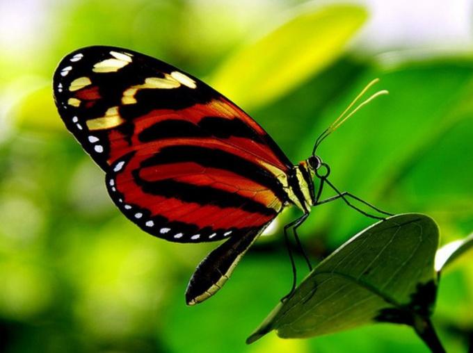 бабочек