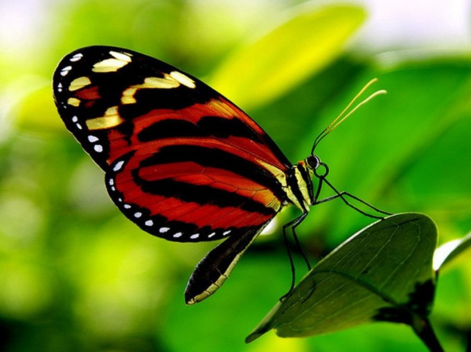 Как видит бабочка