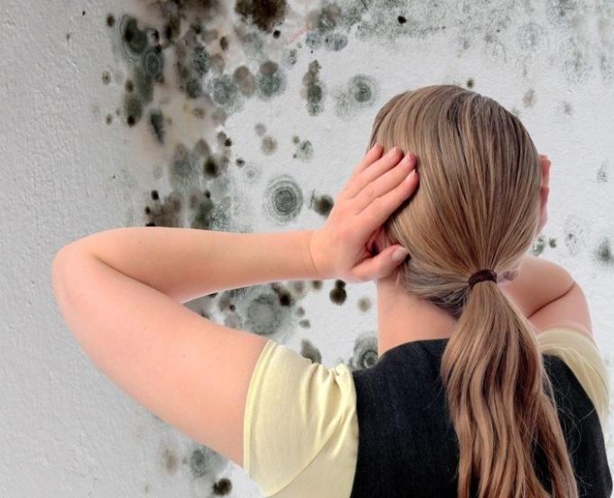 Как бороться с плесенью стен