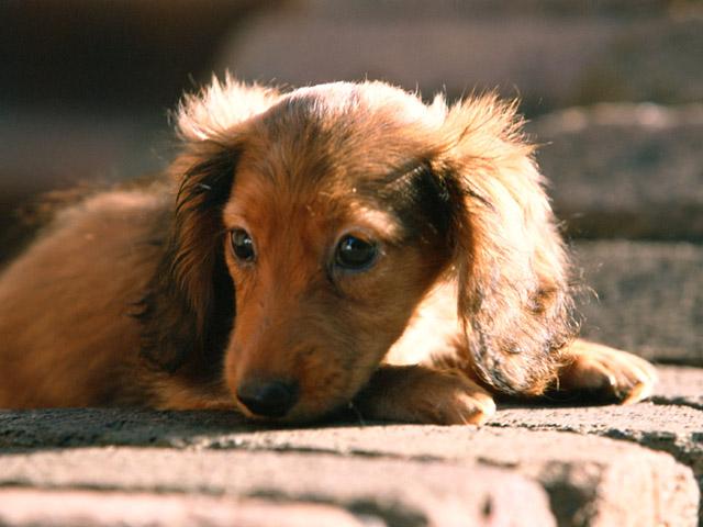 Потерялась собака, что делать?