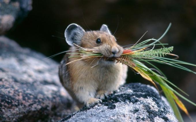 Как зимуют мыши