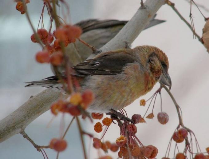 что делают птицы зимой