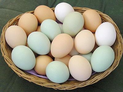 Куриные яйца сжигают жир