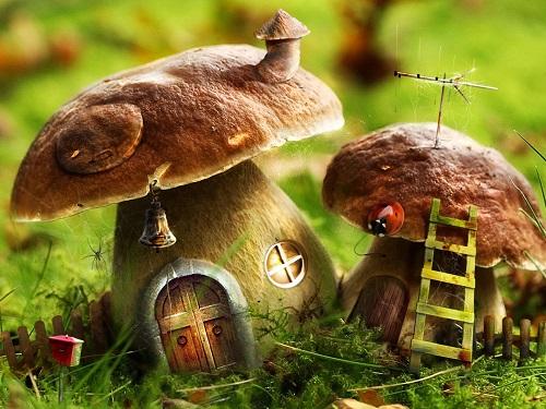 Продукты, повышающие иммунитет - грибы