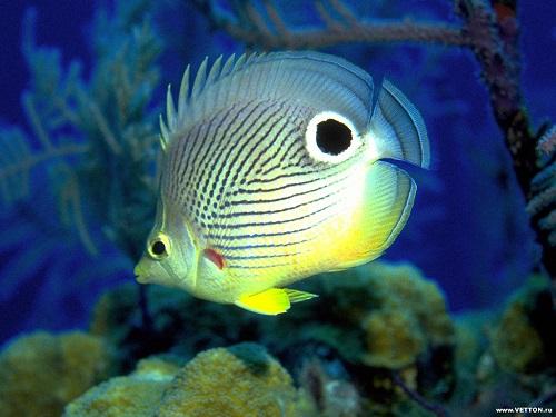 Продукты для иммунитета - рыба