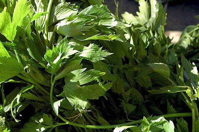 Травяные чаи для похудения - чай из любистока