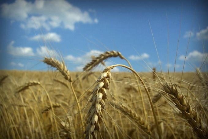 Организация фермерского хозяйства