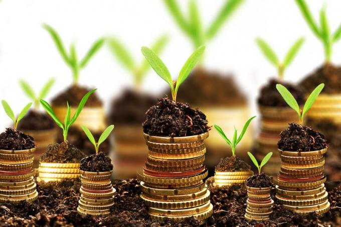 При грамотном инвестировании, ваши личные средства будут расти, как грибы после дождя.