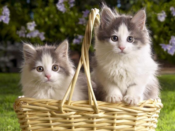 Кошки и кино