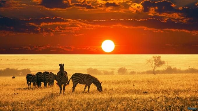 В Африку с туроператором?