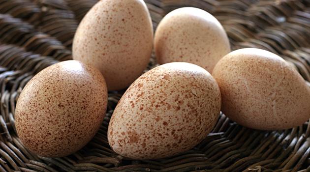 Яйца каких пернатых можно использовать в кулинарии