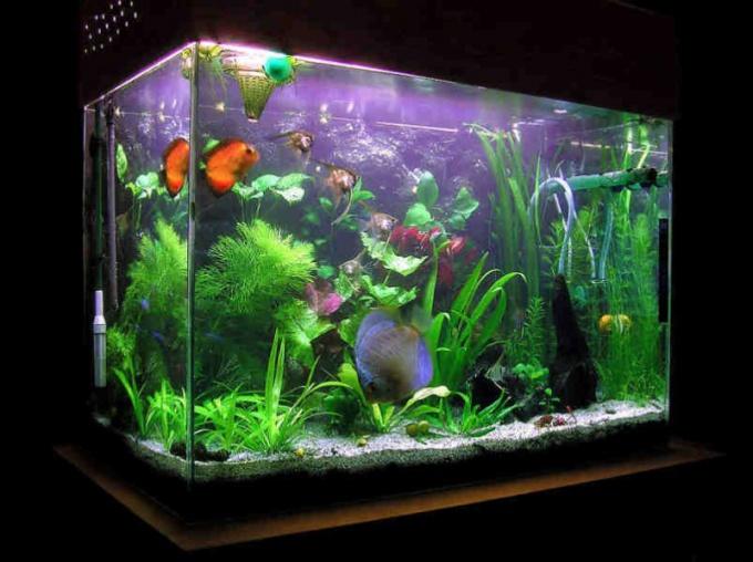 Как правильно установить аквариум