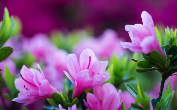 Выращиваем любимые цветы правильно