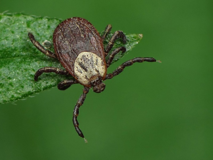 What disease is transmitted by ticks