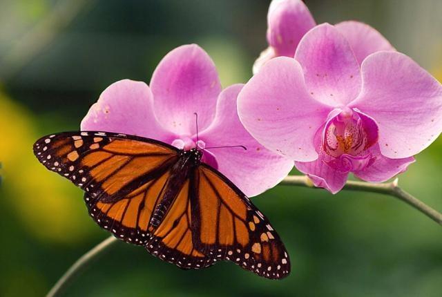 Как появляются бабочки