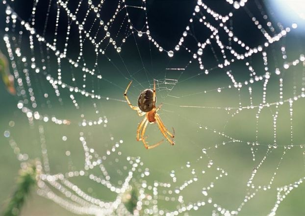 Like a spider weaves a web