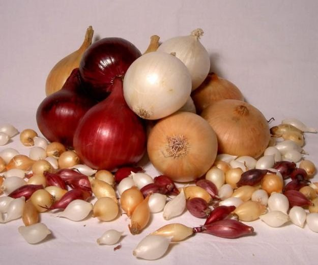 Как правильно сажать лук-севок