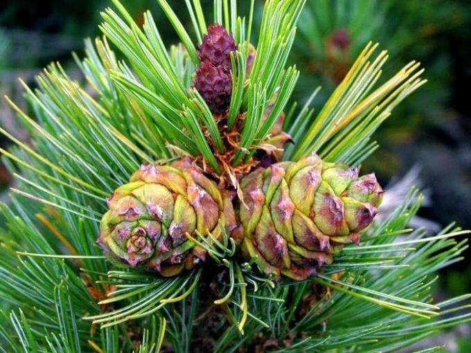 Как шла эволюция растений