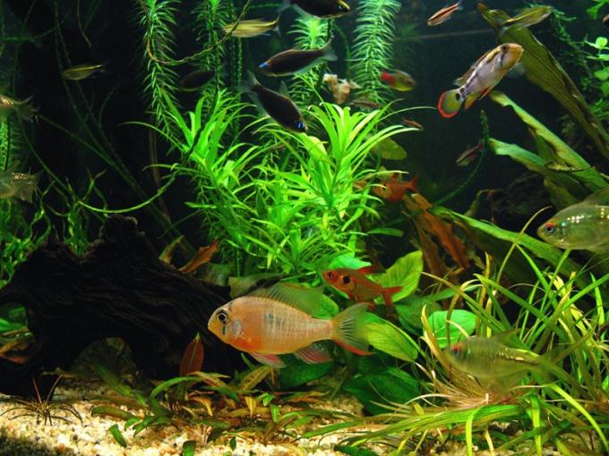 Как убирать аквариум