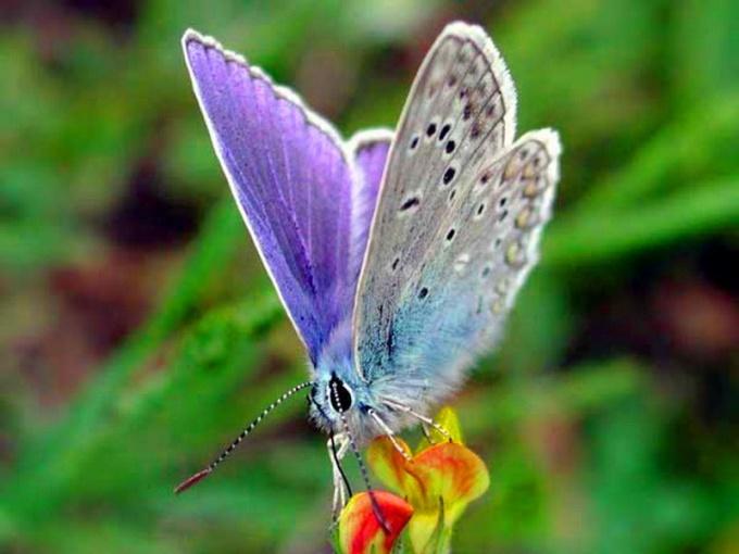 Куда пропадают бабочки