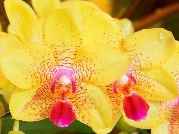 Как ухаживать за орхидеями после цветения