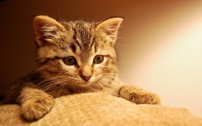 Находясь вне дома, кот должен чувствовать себя комфортно.