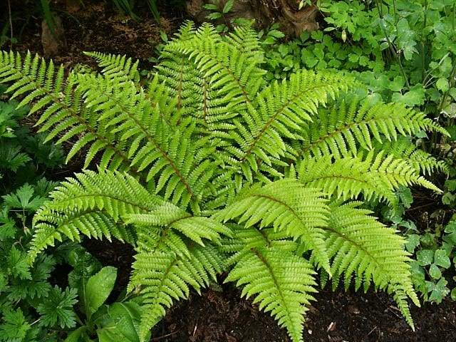 Почему папоротники - высшие растения