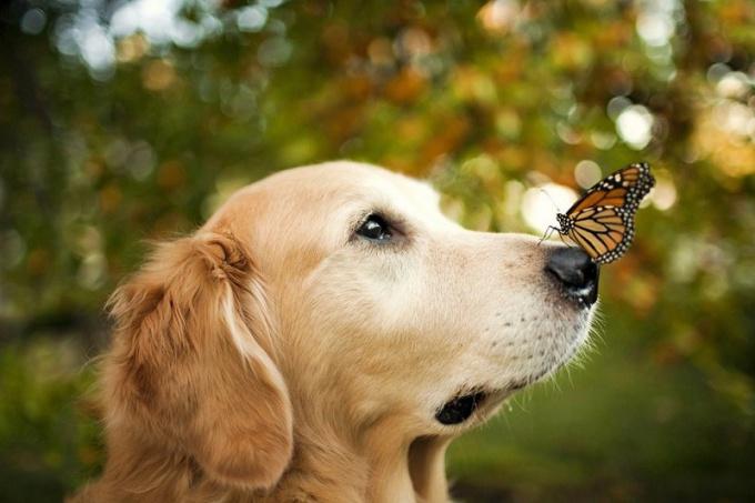 Как сделать свою собаку счастливой