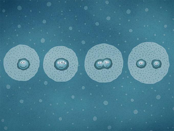 Как размножаются живые организмы