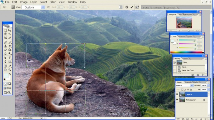 Как выделять сложные объекты в Фотошопе