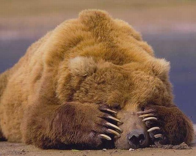 Какие животные впадают в спячку