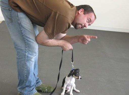 """Как научить собаку команде """"Чужой"""""""
