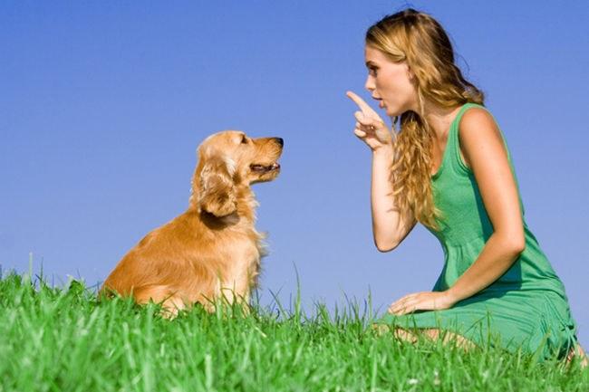 Как заниматься с собакой