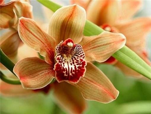 """Как пересадить """"детку"""" орхидеи"""