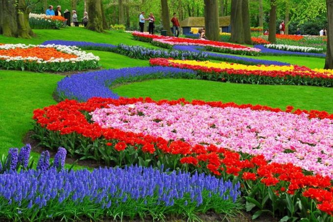 Схема как посадить цветы 581