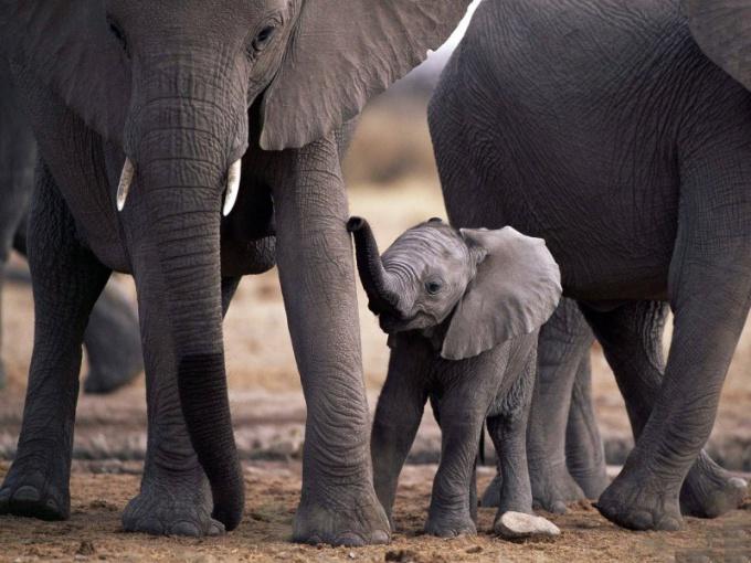 кто из животных кроме слонов боится мышей