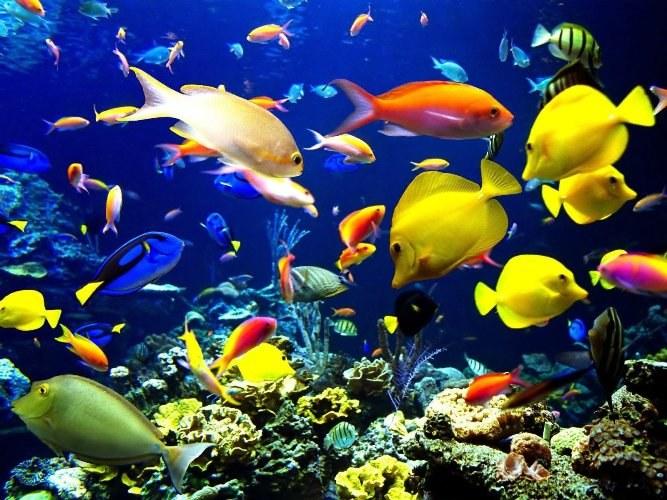 Как открыть магазин по продаже рыб