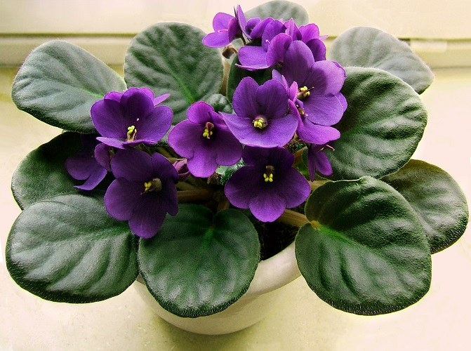 How to transplant store-bought flower