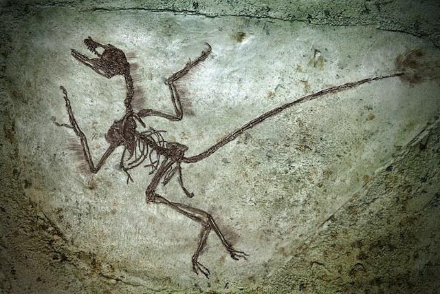 Как шла эволюция животных