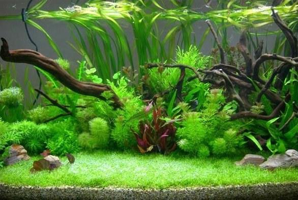 чем промыть растения из аквариума