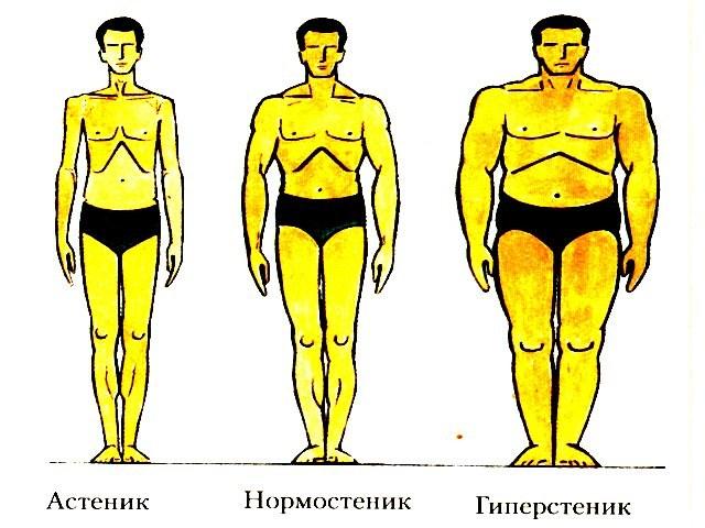 Тип телосложения человека