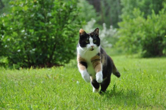ходит кошка