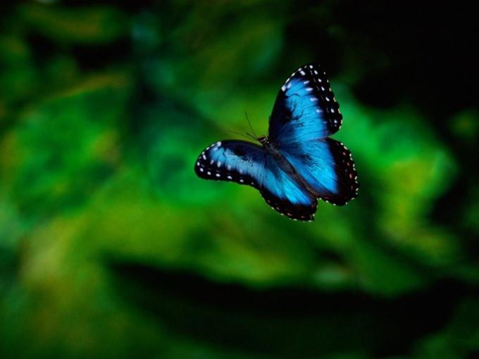 тема нельзя ловить бабочек