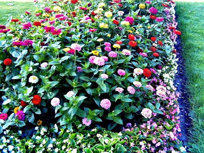 How to plant flowers in the flowerbed