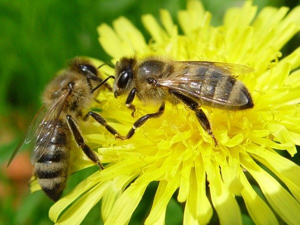 Как уберечь себя от пчел