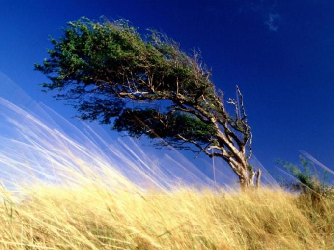 Какой бывает ветер