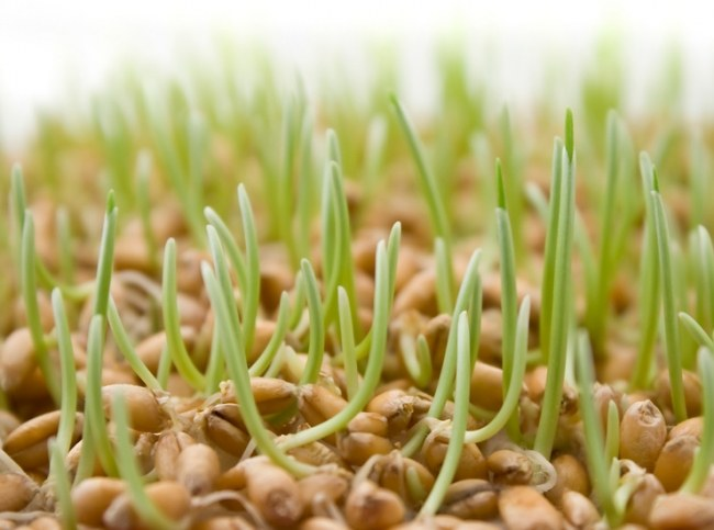How to test seeds for germination