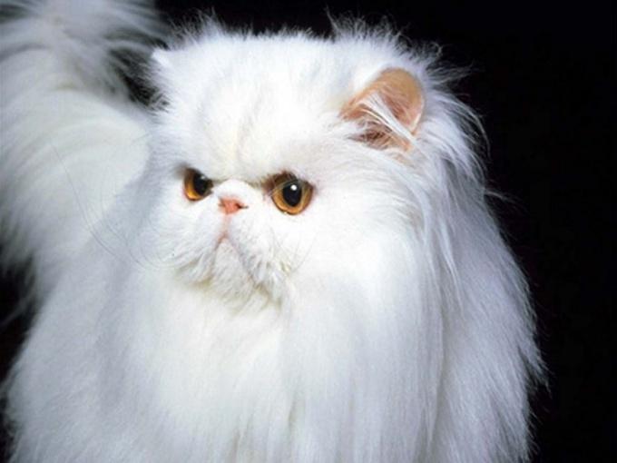 как подстричь пушистого кота