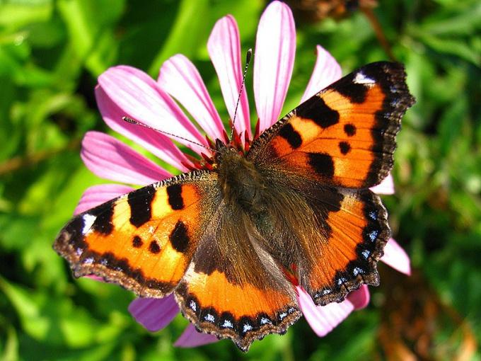 Какие насекомые просыпаются весной